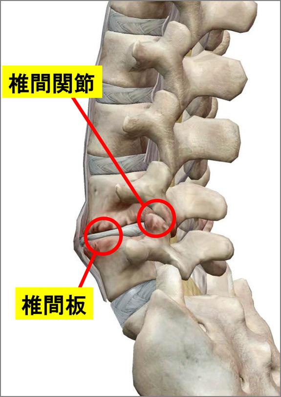 椎間板と椎間関節